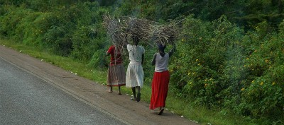 Ladies carrying wood (Kenya)